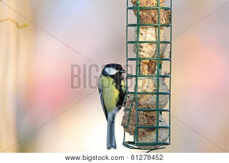Great Tit Hanging On Fat Feeder