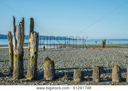 Old Pilings On Stony Beach