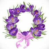 Wreath Of Purple Spring Crocus With Beautiful Pink Ribbon Bow.jpg