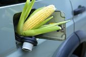 image of ethanol  - Corn sticking out of gas tank - JPG