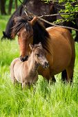 image of horses eating  - Very nice horse family in the pasture - JPG