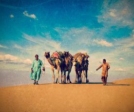 pic of camel  - Vintage retro hipster style travel image Rajasthan travel background  - JPG