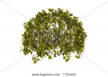 Decorative Bush With Clipping Path