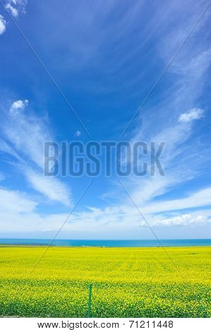 cole flower and blue sky