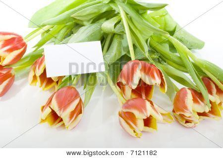 the bouquet of tilip