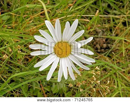 Margaret Flowers Adorned In The garden