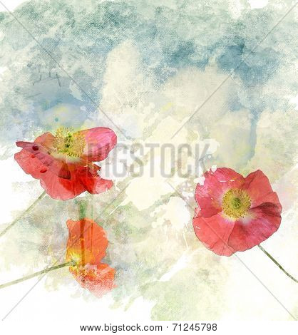 Watercolor Digital Painting Of  Poppy Flowers