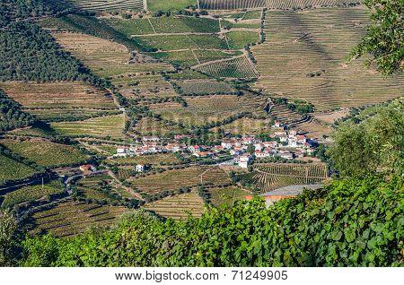 Vineyars In Douro Valley
