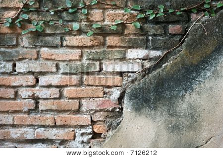 Partially Exposed Brickwork With Plaster And Creepers