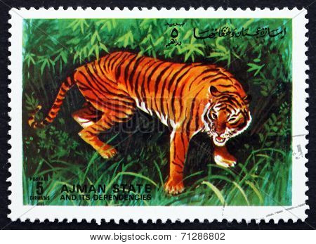 Postage Stamp Ajman 1972 Tiger, Pantera Tigris, Animal