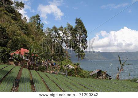 Countryside And Lake Batur