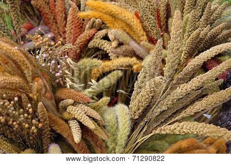 Colourful Cereal Plants