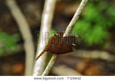Insect Macro, Laos
