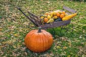 stock photo of gourds  - A large pumpkin and a hand cart full of autumn gourds on a leafy lawn - JPG