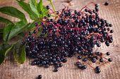 pic of elderberry  - Fresh elderberry on dark wooden background - JPG