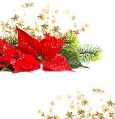 picture of poinsettia  - Red Poinsettia - JPG