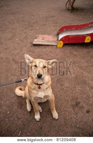 Yellow Dog Collar Sitting On Playground
