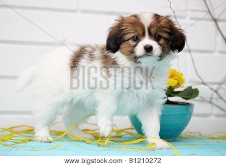 Puppy Playing On The Table