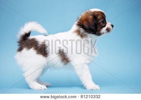 Puppy Standing In Profile