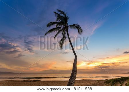 Tropical Sunset Palm