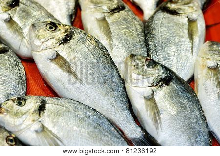 Fresh sea fish