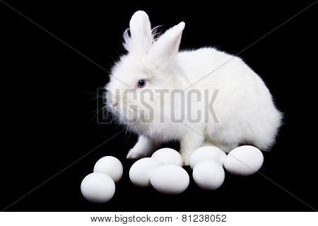 White Rabbit And Eggs On Black