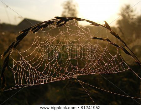 Web in dewdrops at sunrise