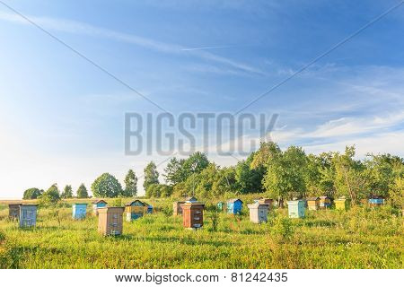 Rural Bee-garden With Several Hives