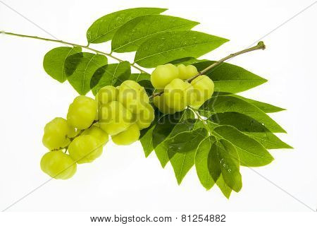 Star Gooseberry And Leaves