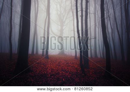Scary haunted forest with mysterious fog