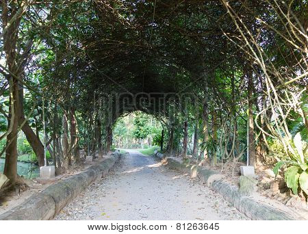 Walkway Under Long Metal Pergola In The Garden