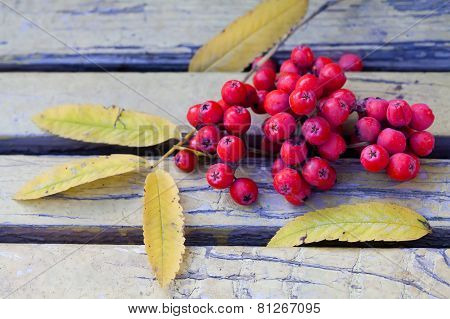 Ashberry On The Vintage Bench