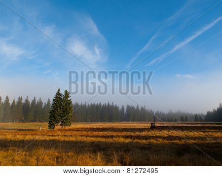 Autumn landscape with spruces