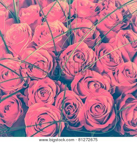 Big Bunch Of Beautiful Pink Roses.