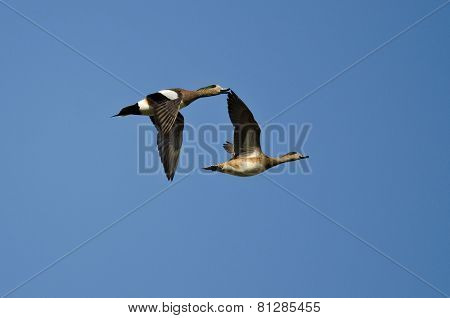 Two American Wigeons Flying In A Blue Sky