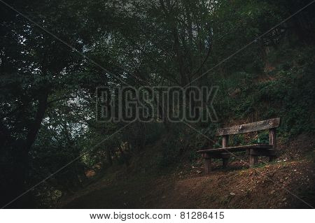 Old Bench Is In A Dark Forest