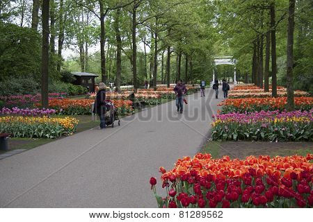 Dutch tulip gardens.