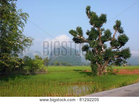 Roadside Scenery In Laos
