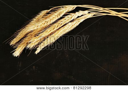 Spikelets of wheat on black wooden background