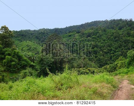 Forest Scenery In Laos