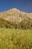 stock photo of shan  - Flowering meadow and scenic peak in mountain range Tien - JPG