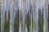 stock photo of hillbilly  - Old wooden planking wall covered with a green moss - JPG