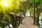 foto of jungle exotic  - Tropical exotic travel concept  - JPG