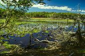 pic of marshlands  - Marshland on Navarino island in southern Chile - JPG