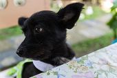 picture of dog clothes  - mongrel black dog wearing green cloth sitting beside the table - JPG
