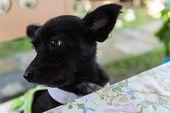 foto of mongrel dog  - mongrel black dog wearing green cloth sitting beside the table - JPG