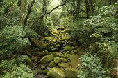 stock photo of rainforest  - Brazil  - JPG