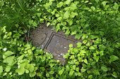 pic of tombstone  - Fallen tombstone at an abandoned cemetery in Olomouc - JPG