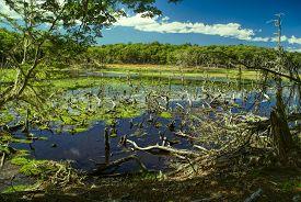 pic of marshlands  - Marshland on Navarino island in southern Chile - JPG