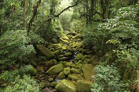 stock photo of ecosystem  - Brazil  - JPG